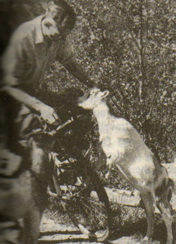 John fending off mountain goats during his 1956 tour of Norway